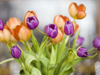 https://i0.wp.com/www.gratis360.it/immagini/Immagini_di_fiori_tulipani.jpg
