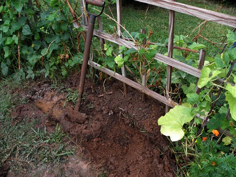 In-Ground Clay Planter Dug Next to Trellis Four