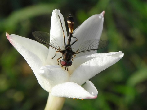 Mystery Bug and Mystery Flower