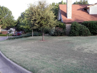 East side of front yard in July 2013, before conversion to wildflower garden: nothing but bleached-out Bermuda grass and sand burs.