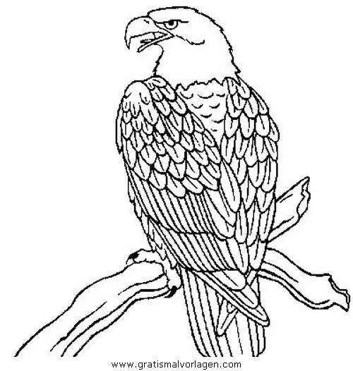 Adler 00 gratis Malvorlage in Adler Tiere - ausmalen