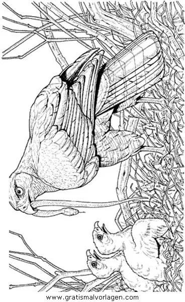 Adler 06 gratis Malvorlage in Adler Tiere - ausmalen