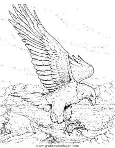 Adler 07 gratis Malvorlage in Adler Tiere - ausmalen