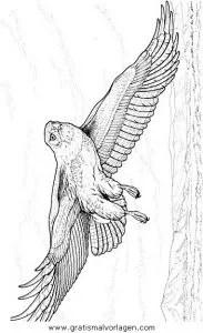 Adler 09 gratis Malvorlage in Adler Tiere - ausmalen