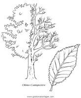 Malvorlagen Kastanienbaum   Coloring and Malvorlagan