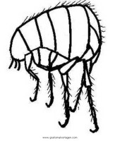 floh 2 gratis Malvorlage in Insekten, Tiere   ausmalen