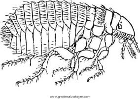 floh 3 gratis Malvorlage in Insekten, Tiere   ausmalen
