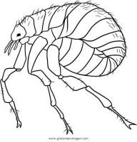 floh 4 gratis Malvorlage in Insekten, Tiere   ausmalen
