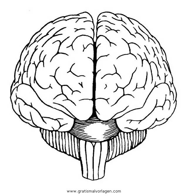 Gehirn 2 gratis Malvorlage in Diverse Malvorlagen, Körper