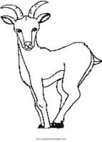 gemse 255 gratis Malvorlage in Tiere, Verschiedene Tiere ...