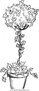 Buchsbaum gratis Malvorlage in Diverse Malvorlagen Garten