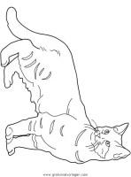 katzen 117 gratis Malvorlage in Katzen, Tiere   ausmalen