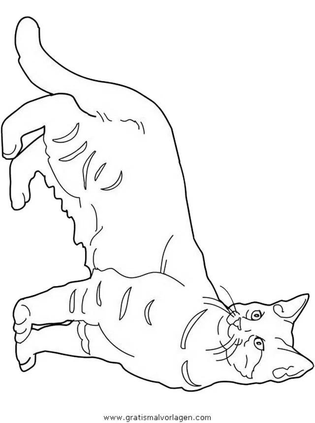 Katzen 117 gratis Malvorlage in Katzen Tiere - ausmalen