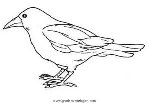 Krahe 6 gratis Malvorlage in Tiere Vögel - ausmalen