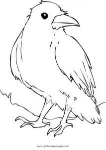 Krahe 9 gratis Malvorlage in Tiere Vögel - ausmalen