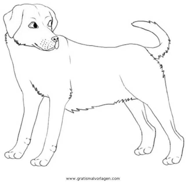 Labrador 3 gratis Malvorlage in Hunde Tiere - ausmalen