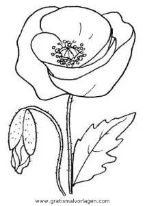 Mohnblume Mohnblumen 3 Gratis Malvorlage In Blumen Natur