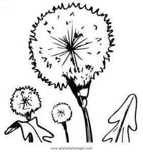 Pusteblume 1 gratis Malvorlage in Blumen Natur - ausmalen