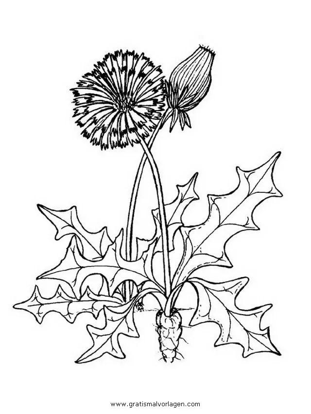 Pusteblume 3 gratis Malvorlage in Blumen Natur - ausmalen