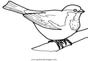rotkehlchen 2 gratis Malvorlage in Tiere, Vögel   ausmalen