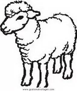 Schafe 00 gratis Malvorlage in Schafe Tiere - ausmalen