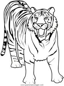 Tiger 07 gratis Malvorlage in Tiere Tiger - ausmalen