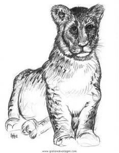 Tiger 12 gratis Malvorlage in Tiere Tiger - ausmalen