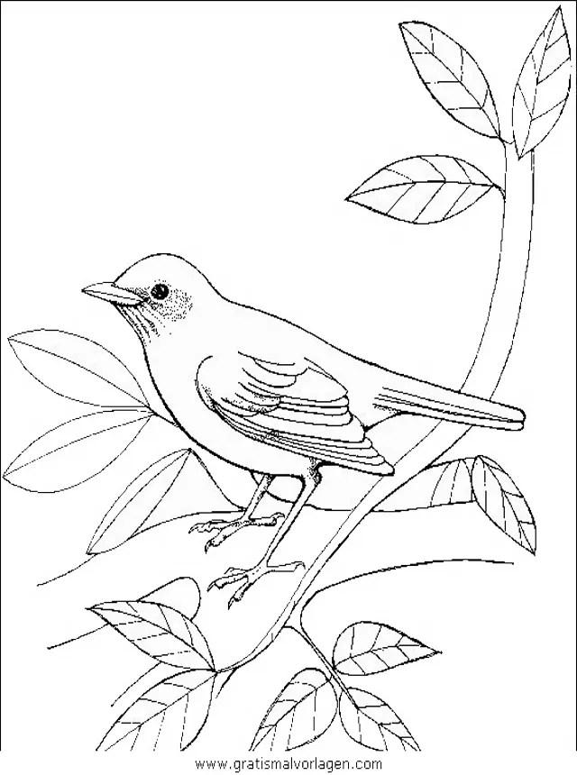 Verschiedene vogel 083 gratis Malvorlage in Tiere Vögel