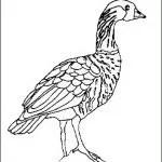 Malvorlage Vogelspinne