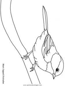 Verschiedene vogel 180 gratis Malvorlage in Tiere Vögel