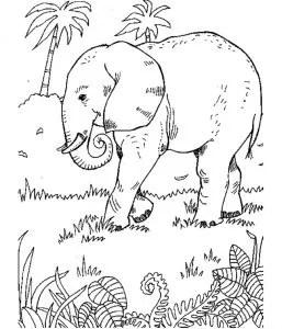 Zoo_00369 gratis Malvorlage in Tiere Zoo - ausmalen
