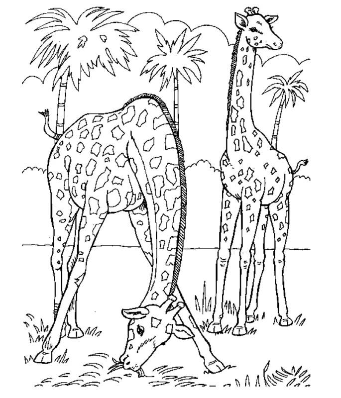 Zoo_00373 gratis Malvorlage in Tiere Zoo - ausmalen