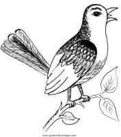singvogel 2 gratis Malvorlage in Tiere, Vögel   ausmalen