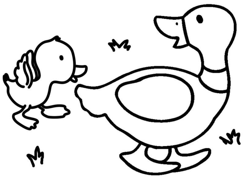 Dibujos De Animales Para Colorear Pintar E Imprimir Gratis