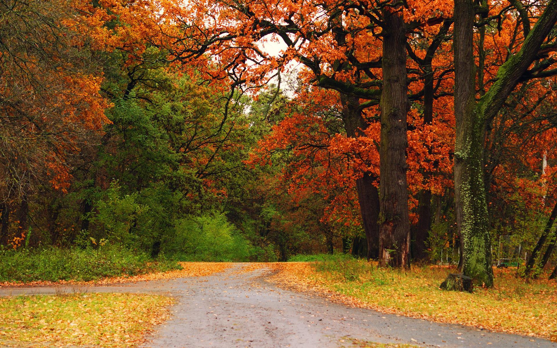 Fall Woodsy Pc Wallpaper Fondos Oto 241 O Wallpapers Autumn Fondos De Pantalla De Oto 241 O