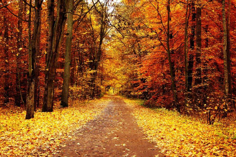 Red Fall Leaves Iphone Wallpaper Paisajes De Oto 241 O Para Fondos De Pantalla Oto 241 O Wallpapers