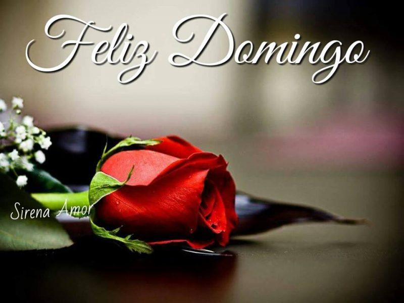 Animated Love Couple Wallpapers Imagenes De Feliz Domingo