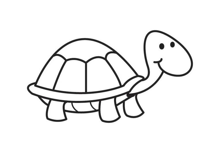 Dibujos Para Pintar Colorear Animales Tortugas 22 Auto