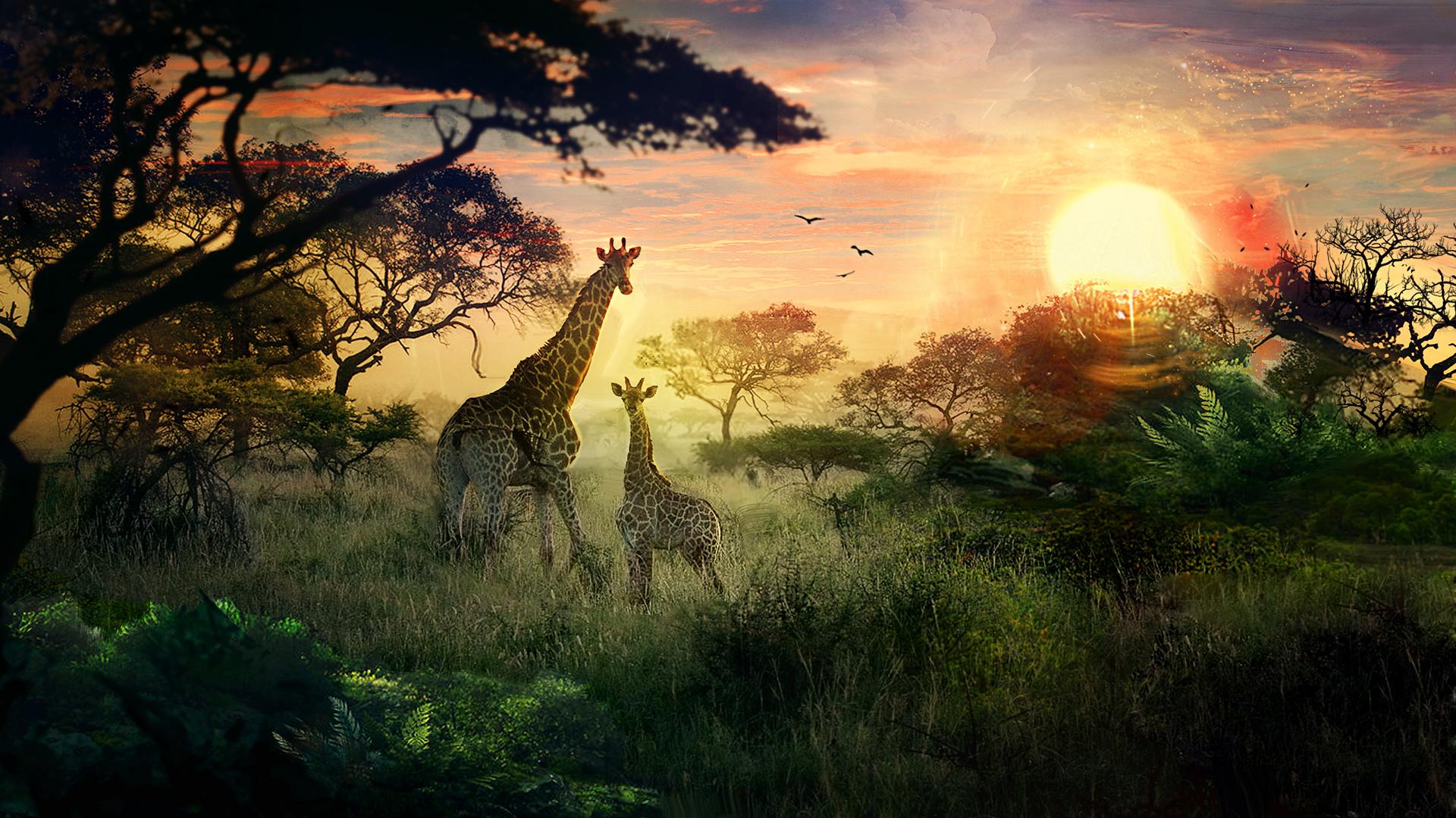 Awesome Nature Wallpapers Hd 14 Fondos De Pantalla De Jirafas Wallpapers Hd