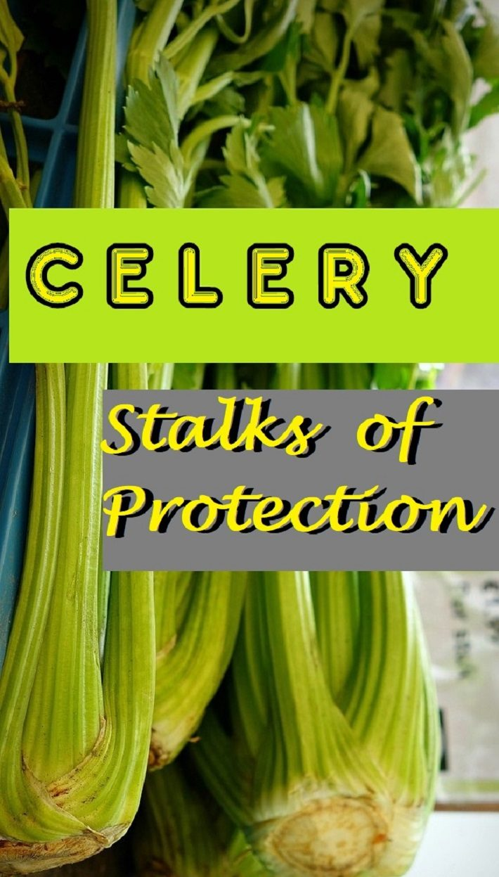 STALKS OF PROTECTION – Celery