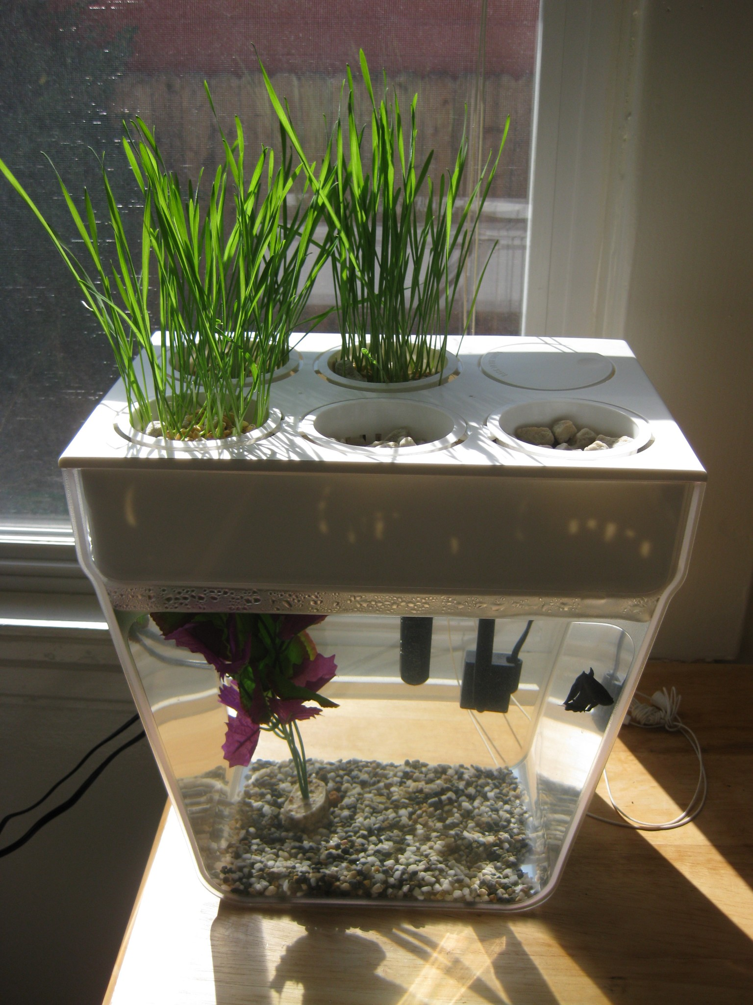 kitchen herb kit flooring for aquaponics with the back to roots fish tank ...