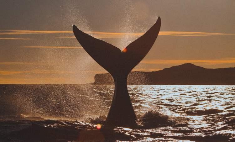 ballena oceanos medio ambiente ecologia