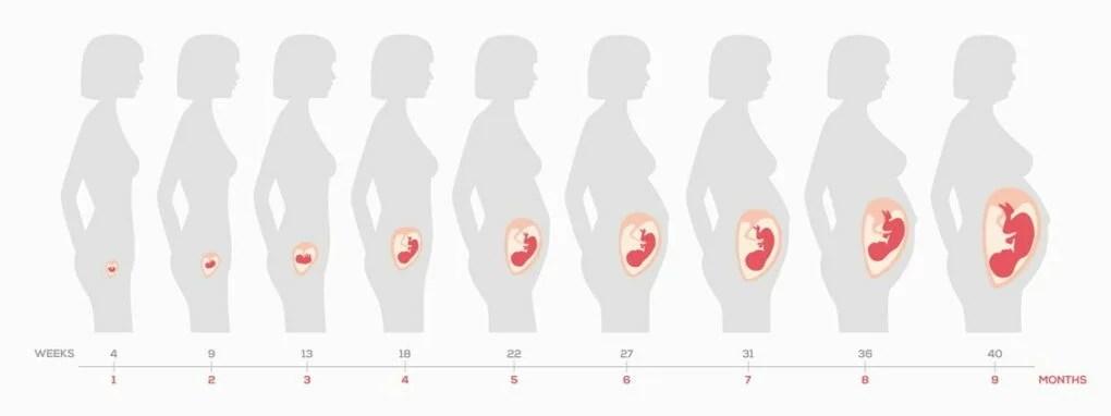 hvor langt er jeg i min graviditet