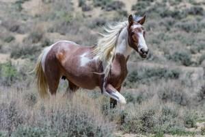 Sapphire, a mare born in 2015