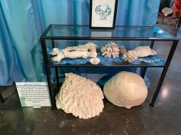 International Mermaid Museum aberdeen 19