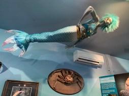 International Mermaid Museum aberdeen 21