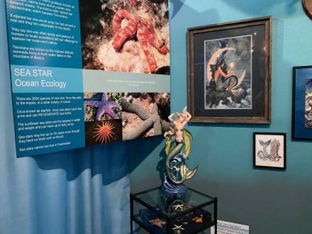 International Mermaid Museum aberdeen 8