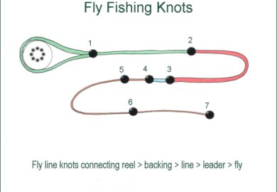 Fishing Knots Fly Line To Backing Knot