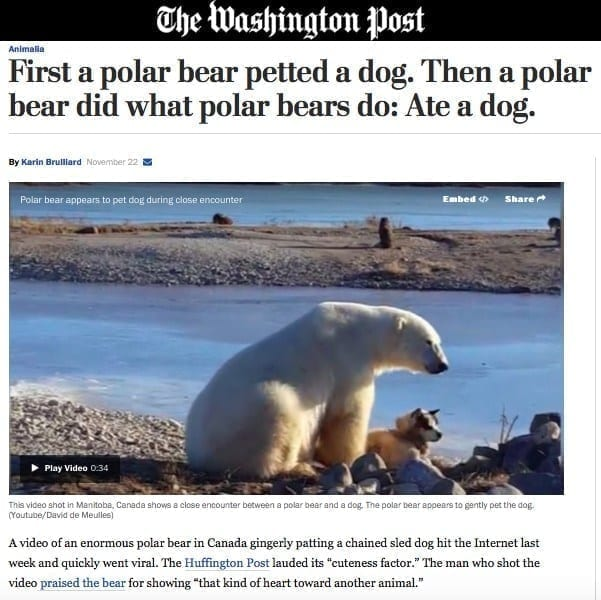 polarbear-dog-washington-post-click-bait