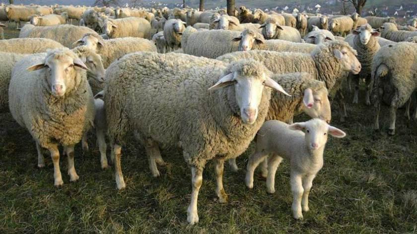 Pecuária e Animais de Fazenda